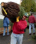 Photo of a treelot elf carrying a tree.